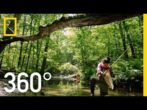 Canada's Wild Rivers - 360 | Into Water