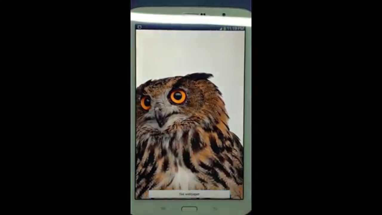 Amazing Wallpaper Home Screen Owl - maxresdefault  HD_655838.jpg