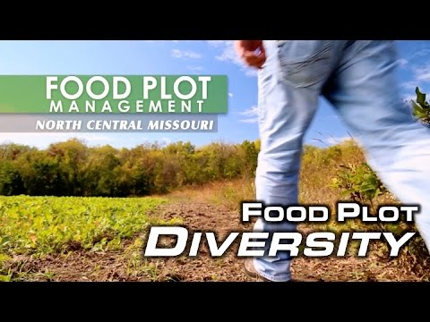 Food Plot Diversity | MossyOakGamekeepers
