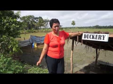 Video 5 - Sunrise Farmers Cluster, Talacogon, Agusan del Sur