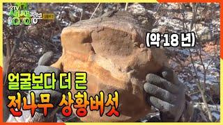 [2TV 생생정보] 버섯에도 나이테가 있다? 약 18년 추정 얼굴보다 더 큰 전나무 상황버섯★ | KBS 2…