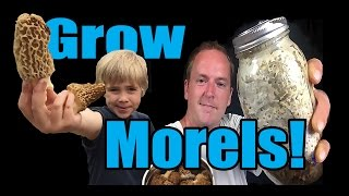 How to Grow Morel Mushrooms!  At HOME!