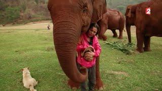 Thaïlande : elle sauve les éléphants maltraités pour le tourisme