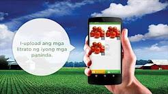 KROPS AVP   Paano Magbenta sa Krops Mobile App