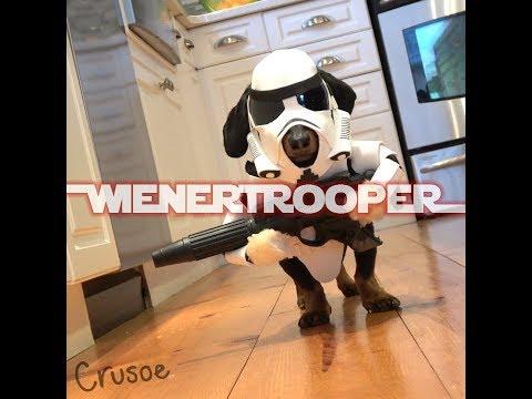 Star Wars WIENERTROOPER - Dachshund Star Wars Cosplay!