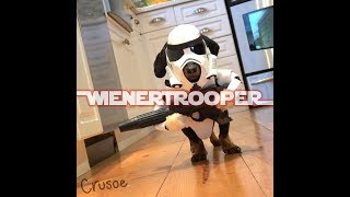 Star Wars WIENERTROOPER  Dachshund Star Wars Cosplay!