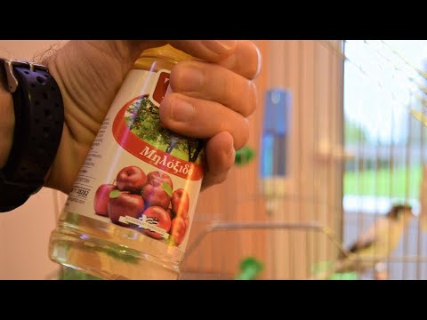 healthy-canaries-with-this-*secret-tip*-apple-vinegar