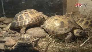 Читинская семья создала дома приют для черепах