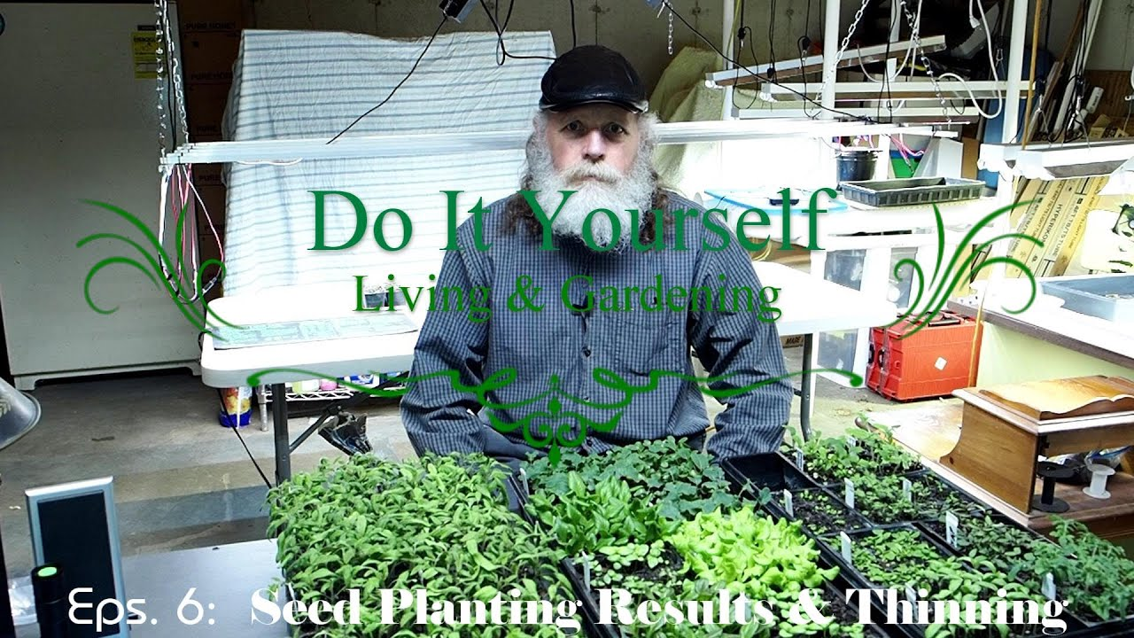 Download Episode 6: Seed Planting Results From Episode 4, Thinning and Transplanting Seedlings