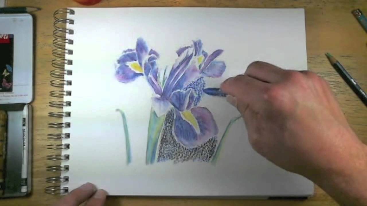 How to draw with watercolor pencils live lesson excerpts youtube