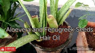 Aloevera gel and fenugreek seeds hair oil  (HD)