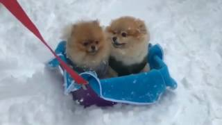 I enjoy with the snow Funny Dog Videos. Funny Cats und Kittens Vide...