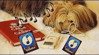 Срочно скачиваем музыкальный плеер из App Store «Собака» Sobaka или как скачивать Файлы на ios