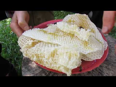 Постройка пчелиных ячеек с нуля