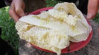 видео Соты пчелиные