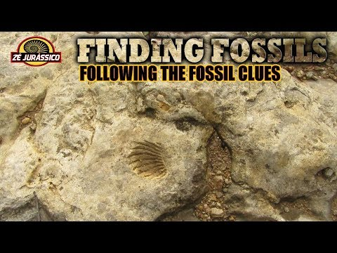 Finding Fossils - Following the Fossil Clues - YouTube