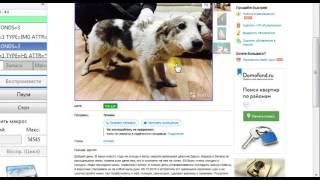 Парсер обьявлений авито avito бот для avito скрипт