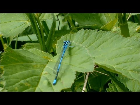 Микромир насекомых (insect Microcosm)
