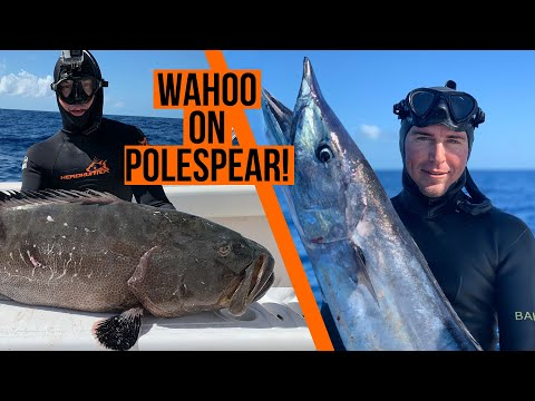 How We Shot A Wahoo And Big Grouper On A Polespear