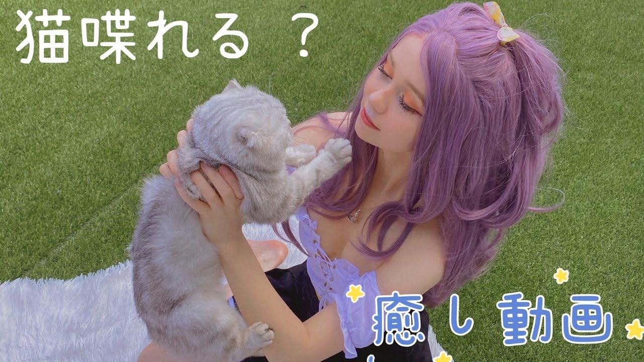 猫の紹介!!!世界一優しい猫!!