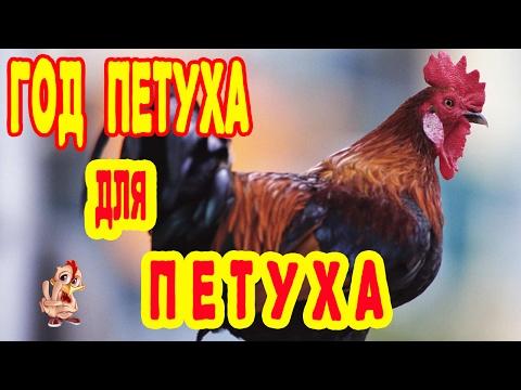 ГОД ПЕТУХА ДЛЯ ПЕТУХА. ГОРОСКОП 2017 ДЛЯ ПЕТУХА. ХАРАКТЕРИСТИКА.