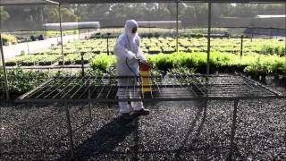 Disinfestation Procedures For Potting Benches