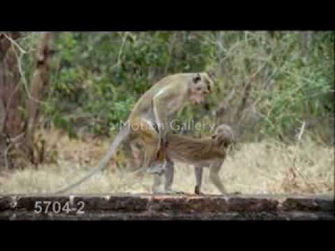 Gay DogsKaynak: YouTube · Süre: 1 dakika14 saniye