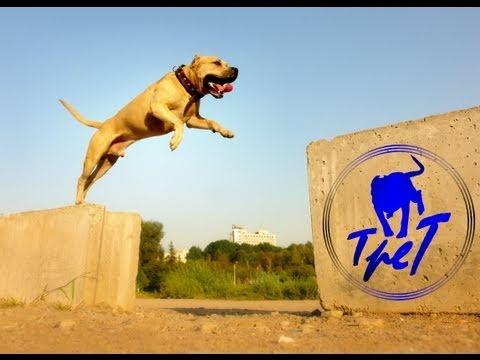 TreT-Style (parkour dog from Ukraine)