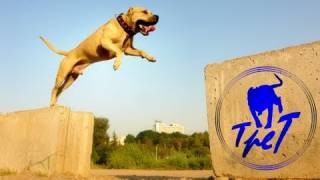 TreT-Style (parkour dog from Ukraine)