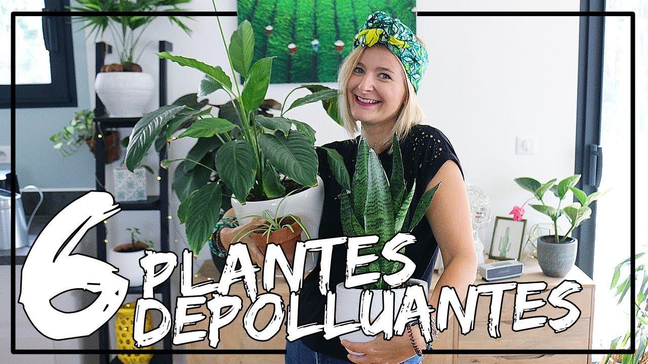6 plantes dépolluantes à adopter dans votre intérieur