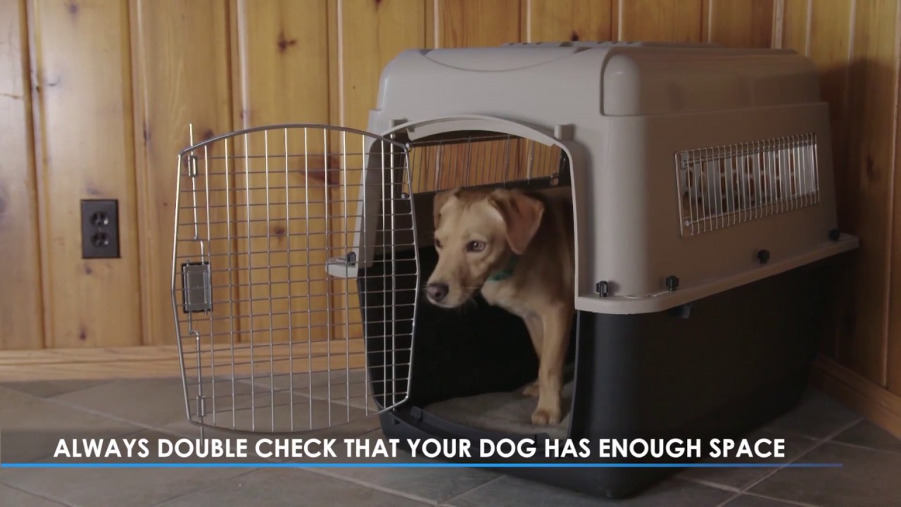 A Kennel Or Crate For Your Dog