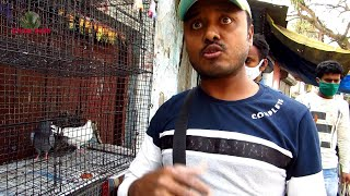 GALIFF STREET PIGEON MARKET KOLKATA INDIA | HIGH FLYING PIGEON TIPS | 21ST FEBRUARY 2021 VISIT PART3