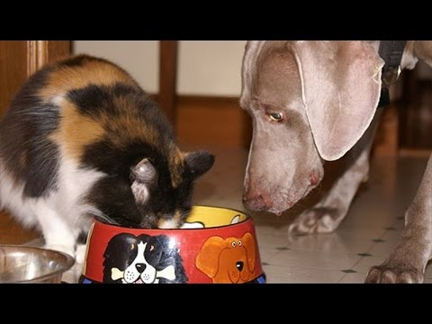 Cats and dogs fighting for food - Funny dog & cat compilation
