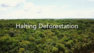 Halting Deforestation