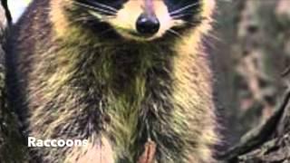 Zoology Michigan Animals