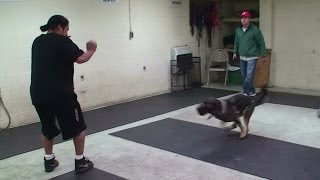Dog Attack Training On Command With No Equipment (k9-1.com)