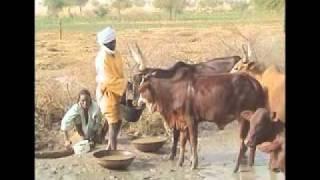 ANIAT - L'élevage nomade