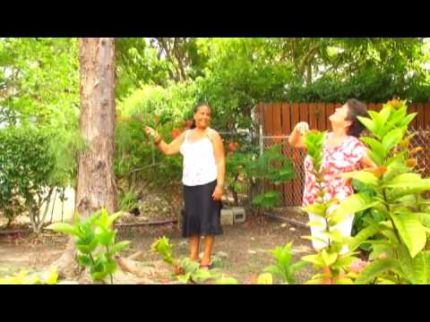 Gardens of Antigua featuring Cheryl Carter of Fitches Creek
