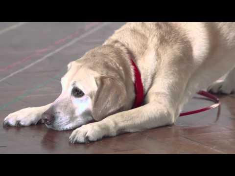Jo Vaughn and Bella's Dog Training Tips - Virgin Media Talent School