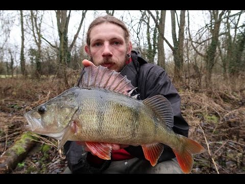 How To Fish Weedless Rig For Perch