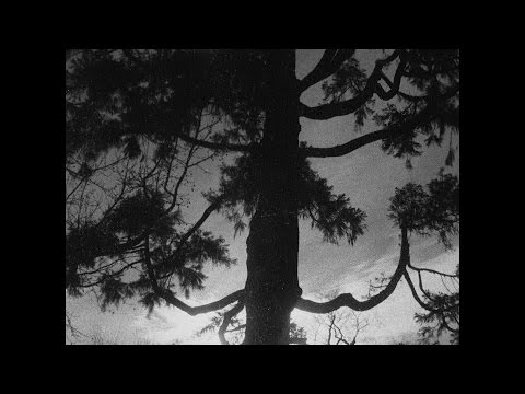 E - Great Light (Official Music Video)