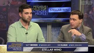 Pegasus World Cup Contender Profile - Stellar Wind