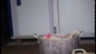"""""""Концлагерь"""" для бездомных собак в Нижнем Новгороде"""