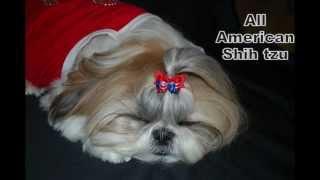 Shih Tzu Dog's Little Red Dress