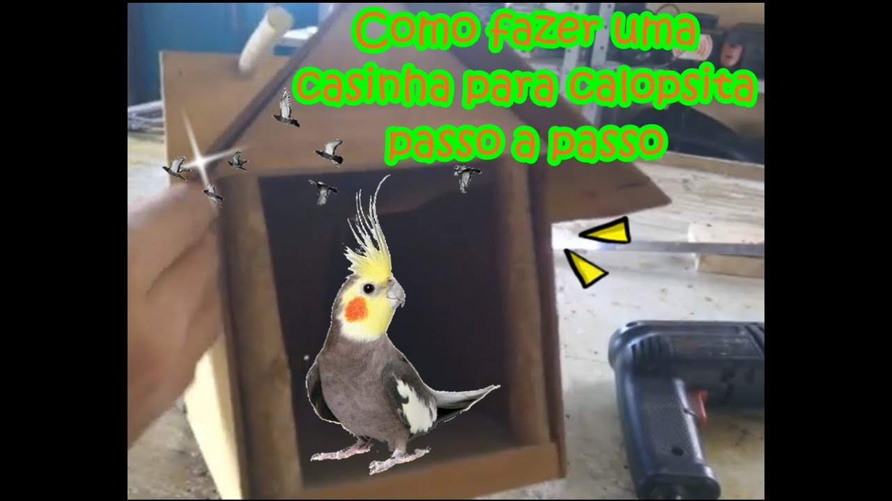 Como fazer uma casinha para calopsita youtube for Como criar peces ornamentales en casa