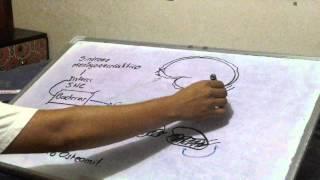 MENINGITIS PARTE 1 (Fisiopatología, Cliníca y Tratamiento)