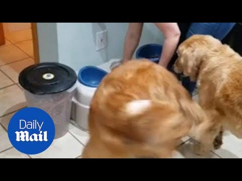 Excited Dog Can't Stop Spinning Before Feeding Time - Daily Mail