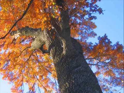 Jo Stafford - Autumn Leaves