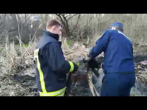 Спасатели вытащили лошадь из болота в Балашихе