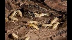 Termite Control | Essential Pest Control